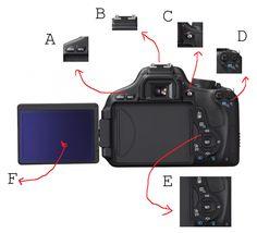 The Canon EOS (Europe) or Canon Rebel (Japan) is an 18 MP CMOS digital single-lens reflex camera. Reflex Camera, Slr Camera, Best Digital Camera, Digital Slr, Canon Rebel T3i, Photography Camera, Entry Level, Canon Eos, Bulbs