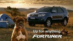 Buddy & Toyota Fortuner