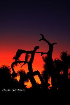 antelope valley sunset