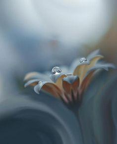 Drops Flower
