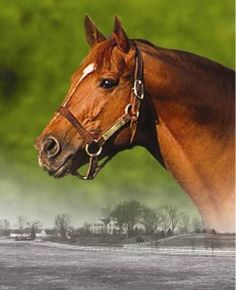 Nasrullah excelled in the breeding shed, siring 98 stakes winners. Among his most famous are:U.S. Racing Hall of Fame horses Bold Ruler, Noor and Nashua. His most famous grandson, of course, was Secretariat, who was also the grandson of Princequillo on his dam's side.