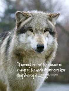 I agree with the wolf on this especially the ignorant dabbling in political matters they know nothing about, making enemies of allies, and refusing to listen to the educated about why global warming or anything else scientific exists. Rude-crude-lewd and pig ignorant. Even the animals know better.