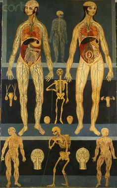 "fyeahanatomy: "" Persian Anatomical Study From Corbis Images. (Via: Morbid anatomy) "" Anatomy Art, Human Anatomy, Vanitas, Pseudo Science, Vintage Medical, Medical History, Medical Art, Natural History, Illustration Art"