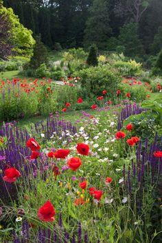 A meadow of Papaver rhoeas, the Flanders Poppy, Salvia nemorosa Caradonna and Oenothera speciosa spill down the hill toward The Pond. Chanticleer, US