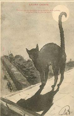Leurs chats.  Et pendant que sa maîtresse est au Moulin de la Galette, son chat flirte au clair de lune (While his owner is at le Moulin de la Galette, her cat flirts in the moonlight...)