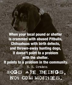 Please adopt, rescue a shelter pet. But please never get a pet if you are not ready to take on the responsibility: nothing sadder than when they go from a home then BACK to a shelter Love My Dog, Dog Quotes, Animal Quotes, Dog Sayings, Animal Pics, Animal Cruelty Quotes, Animal Rescue Quotes, Animal Memes, Wisdom Quotes