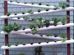 The vertical garden gives you many benefits. Well, the benefits are still there even though you have this garden at . Read Wonderful and Fresh Pipe Vertical Garden Design Vertical Vegetable Gardens, Vertical Farming, Hydroponic Growing, Hydroponic Gardening, Sustainable Gardening, Vertical Hydroponics, Urban Gardening, Diy Jardin, Gutter Garden
