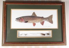 Brown Trout by Joseph Tomelleri Framed and Matted Print
