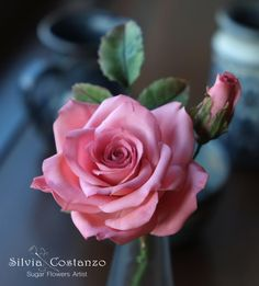 Pink Rose by Silvia Costanzo