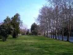 AUTH Campus 1 - Aristotle University of Thessaloniki - Wikipedia Thessaloniki, Greece, Sidewalk, University, Plants, Greece Country, Side Walkway, Walkway, Plant