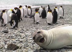 29 najśmieszniejszych zwierząt, które postanowiły przeszkodzić w zdjęciach.