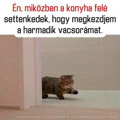 Csak ügyesen!😉😋😂 Funny Images, Funny Pictures, Bad Memes, Me Too Meme, Funny Pins, Puns, I Laughed, Funny Jokes, Haha