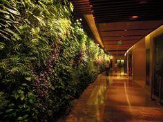 Vertical Garden in the corridor, Sofitel Palm Jumeirah, Dubai