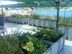 Καλλιέργεια λαχανικών σε ταράτσα Athens, Garden, Flowers, Plants, Diy, Garten, Bricolage, Lawn And Garden, Gardens