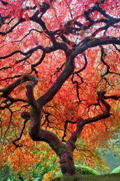 Branching Tree | Dennis Frates  Japanese gardens.