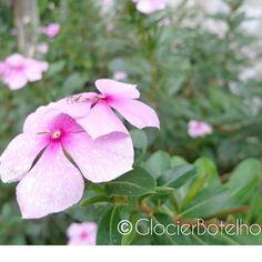 {3/365} Boa tarde a todos! Tem uma pequena aranha nessa flor =) #glocierbotelho #photography #natureza #flowers #spider