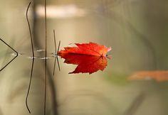 Image copyright protected by Kristina Lishawa