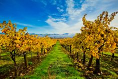 Hop Kiln Winery in Healdsburg, California