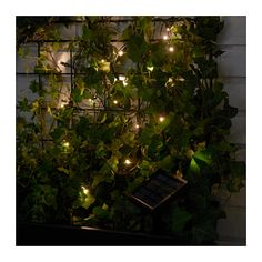 IKEA SOLARVET LED lighting chain with 24 lights Outdoor/solar-powered You can personalise the lighting chain to match the season or your style. Just add ...