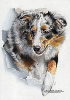 15-Australian-Shepherd-Corinne-Vuillemin-WIP-Color-Drawings-of-Actors-and-Animals-www-designstack-co