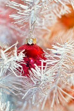 Shiny Wonderland - Gorgeous Holiday Art Print or Greeting Cards!