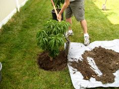 Seven Tips for Planting Trees!