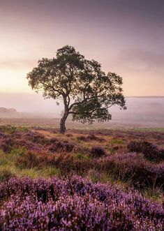The Beautiful English Countryside :: This Is Glamorous Alnwick Castle, Leeds Castle, Castle Combe, Lulworth Cove, Jurassic Coast, Beautiful Places To Travel, English Countryside, Lake District, National Parks