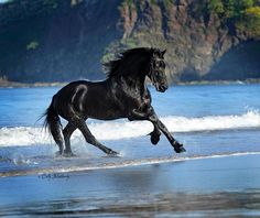Horse racing the waves on the beach