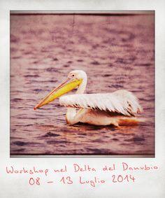 Workshop fotografico sul Delta del Danubio dall'otto al tredici luglio 2014.  www.lucapatelli.com
