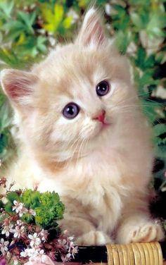 A kitty (: