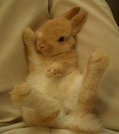 【うさぎの寝方】仰向けに寝るウサギの寝姿が可愛い過ぎると話題【画像】 - NAVER まとめ