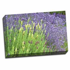 Picture it on Canvas 'Flowing Lavender I' Photographic Print on Wrapped Canvas