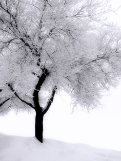 I love this tree..God's icing all over~