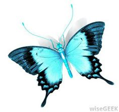 Light Blue Butterfly - Bing Images