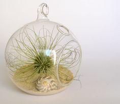 Sea urchin airplant terrarium