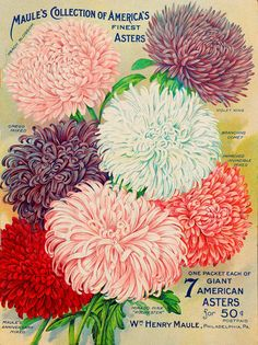 This album contains images from the seed and nursery catalogs digitized for the Biodiversity Heritage Library. Great resource!