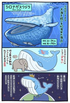 Unfortunately I can't read kanji and my kana needs a lotta work Animals And Pets, Cute Animals, Japanese Animals, Animal Facts, Blue Whale, Weird Creatures, Cute Illustration, Marine Life, Animal Drawings