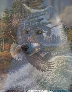 Eagle flys above, Wolf runs below.♡♡°♡♡ Nature from Native Spirits Tribal Community Native American Wolf, Native American Pictures, American Indian Art, Wolf Images, Wolf Pictures, Beautiful Wolves, Animals Beautiful, Tribal Community, Wolf Artwork