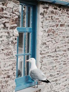 Photos from on Myspace Animals And Pets, Cute Animals, Wow Photo, Window View, Mundo Animal, Sea Birds, Colorful Birds, Belle Photo, Beautiful Birds