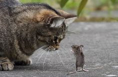 looks like the cat is being lectured to by the mouse :)