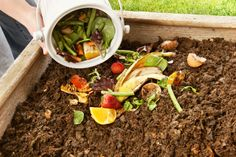 Composting Guide for Beginners – Gardening Steps
