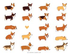 The cutest pooch possible. Corgi Postcards from Olivia When ($5)