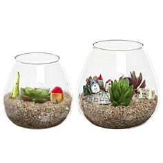 Set of 2 Decorative Modern Round Clear Glass Display Vases / Bowl Candleholders / Air Plant Terrarium Cups