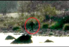 FOX NEWS: 'Bigfoot' reportedly sighted in Northern California pictures go viral Lakes In California, Northern California, California Camping, New Bigfoot Sightings, Beast Videos, Bigfoot Pictures, California Pictures, Finding Bigfoot, Bigfoot Sasquatch
