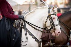 Feira Nacional do Cavalo, Golegã, Portugal, Lusitano Horses, National Horse Fair 2014