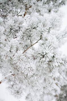 winter landscape by OlgaPilnik on @creativemarket