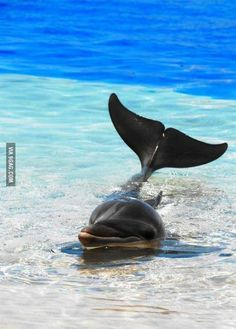 cool animals, dolphin
