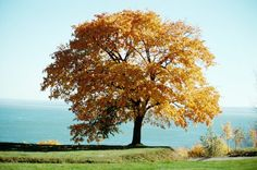 Cómo plantar un árbol de cerezo | eHow en Español