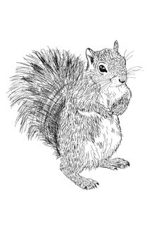 black ink squirrel tattoos - Google Search