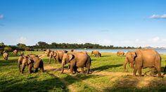 Sri Lanka Trip Planning - Sri Lanka Itinerary Planning - Tailor made tours to Sri Lanka Safari Game, Safari Jeep, Sri Lanka Holidays, India, Bird Species, Show Horses, Fish Tank, Cat Day, Trip Planning